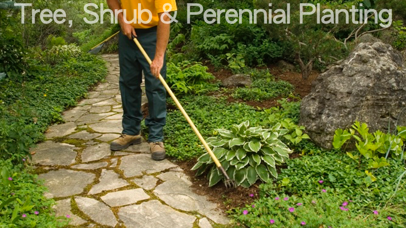 tree-shrub-perennial-planting